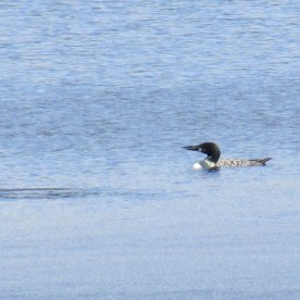 loon, 5 Oct 2014