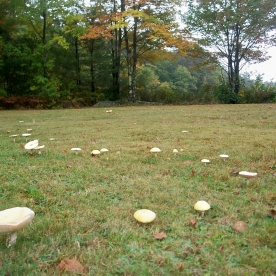 fairy ring, 29 Sept 2012