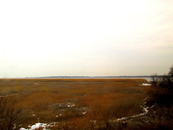 marsh near Old Lyme CT, March 2014