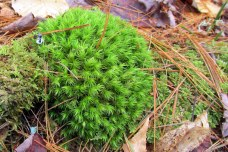 mossKHNP4May2014