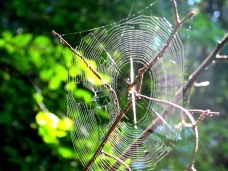 spiderwebKHNP16Sept2015