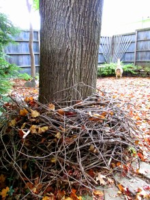 nest for tree, Oct. 2015