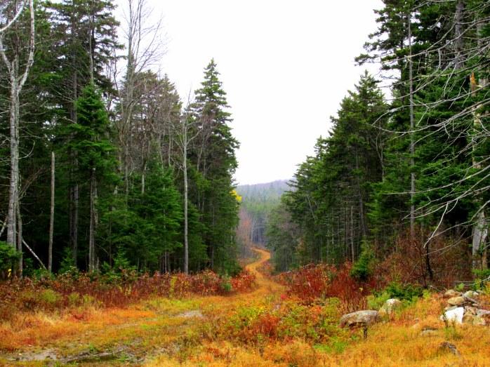 Twin Lake Villas Trail, NH, November 2014