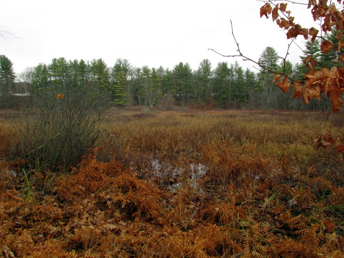 marsh, Northern Rail Trail, Andover, NH - 22 Nov 2015