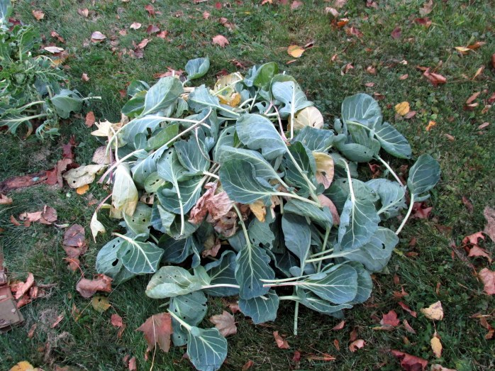Brussels sprouts leaves for composting