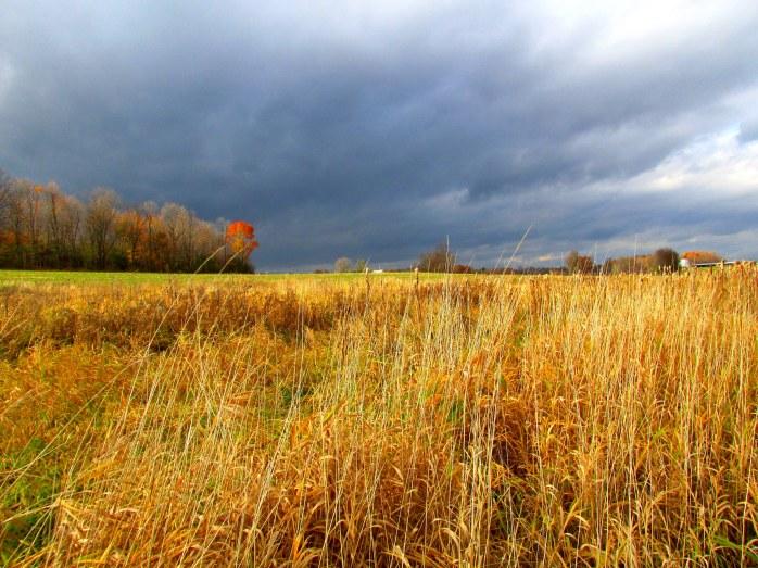 fieldgrassesdarkskyJacksonTrailTAMMiddleburyVT1Nov2015