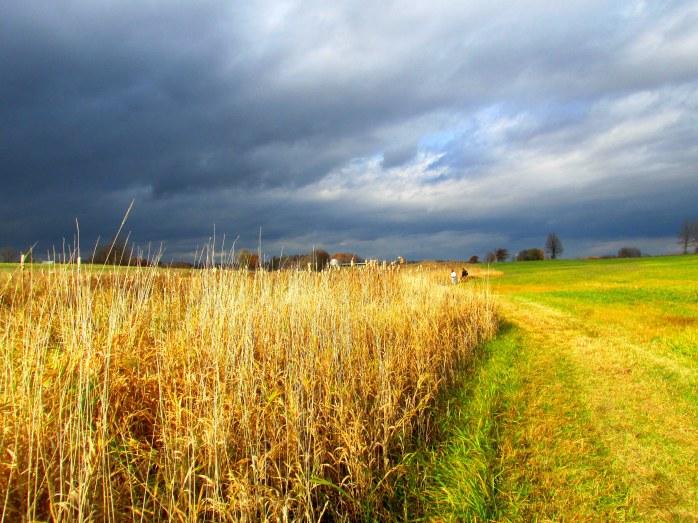 fieldgrassesdarkskypeoplewalkingmastiffdogJacksonTrailTAMMiddleburyVT1Nov2015