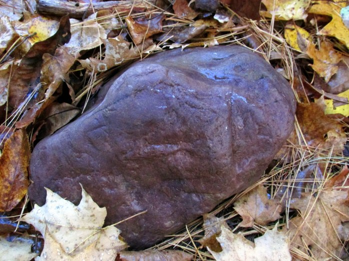 russet rock, Murdock Preserve, Middlebury VT - 1 Nov