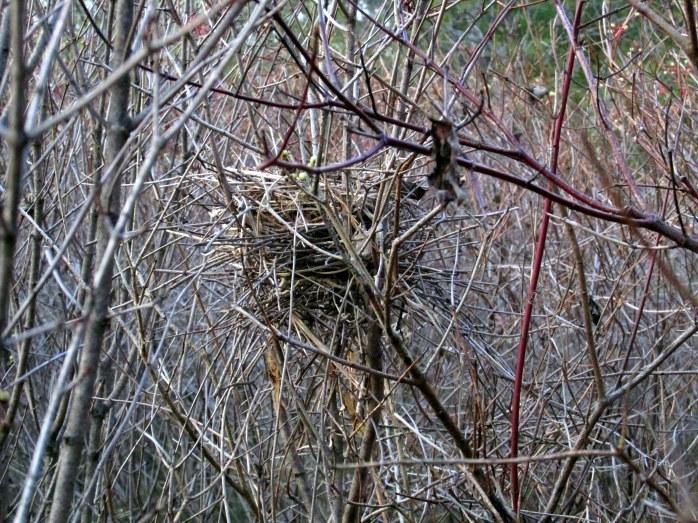 twiggy bird nest Murdock Preserve (TAM)
