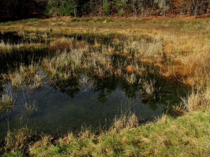 lagoon, Hartford Town Forest, VT - 10 Nov