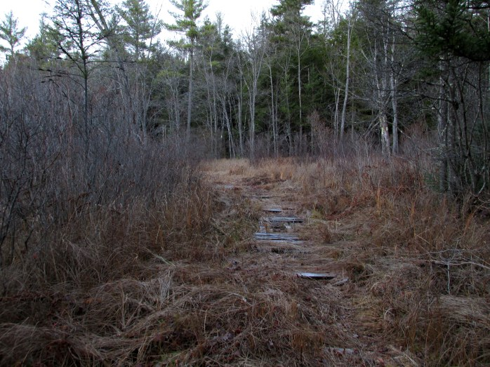 boardwalk, marsh, Low Plains, NH - 8 Nov
