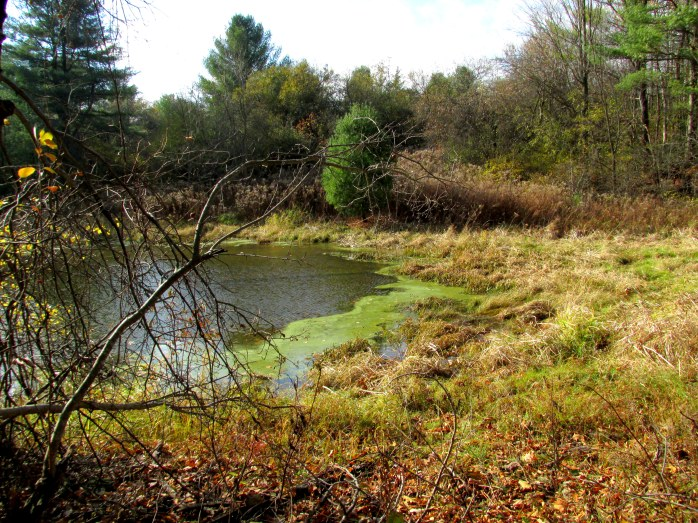 small pond, Jackson Trail (TAM)