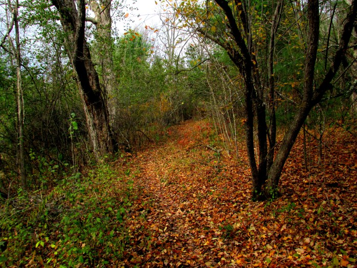 trail with fall leaves, Jackson Trail (TAM)