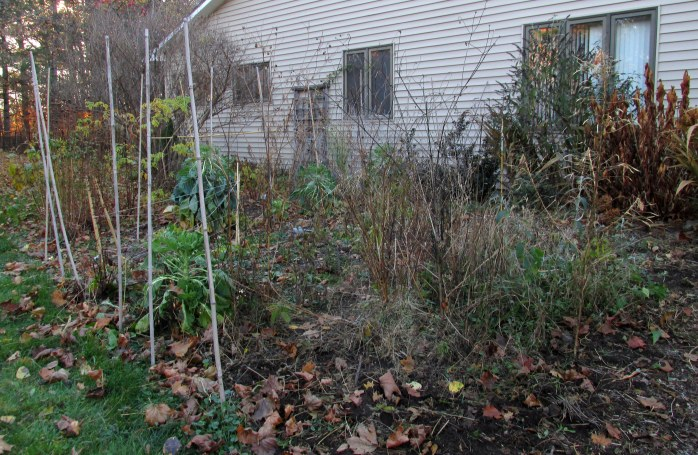 fence partly down in vegetable garden