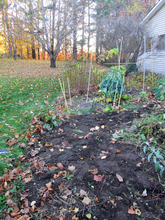 vegetable garden mostly weeded and unfenced