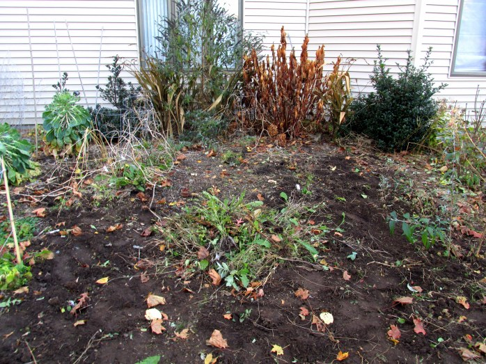 partly weeded vegetable garden