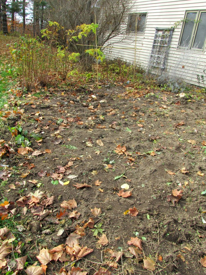 weeded vegetable garden