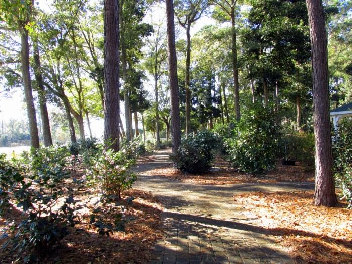 Camellia trail
