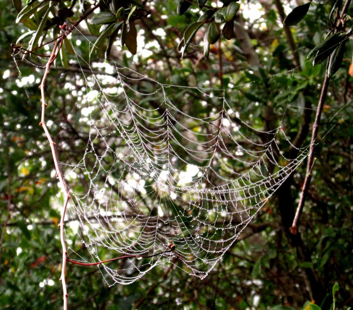 one of many glistening webs