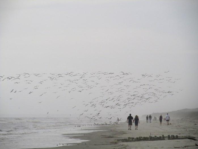 flockbirdsmostlyskimmersmidbeach945amJekyll29Dec2015