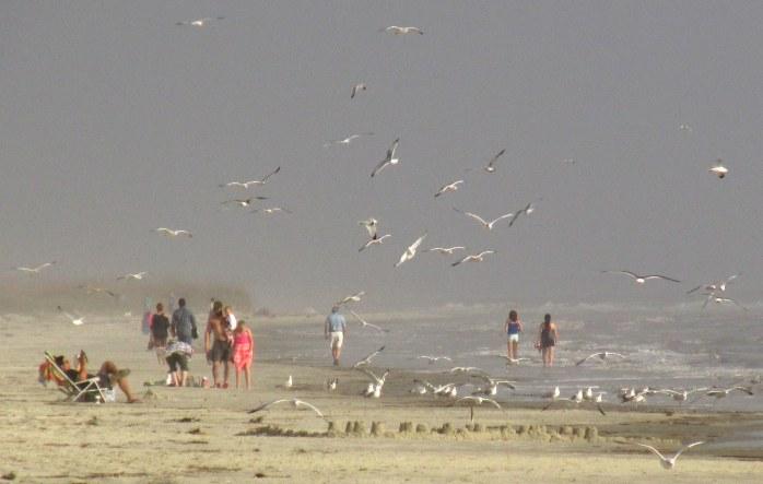 shorebirdsinflightpeoplemidbeachJekyll29Dec2015