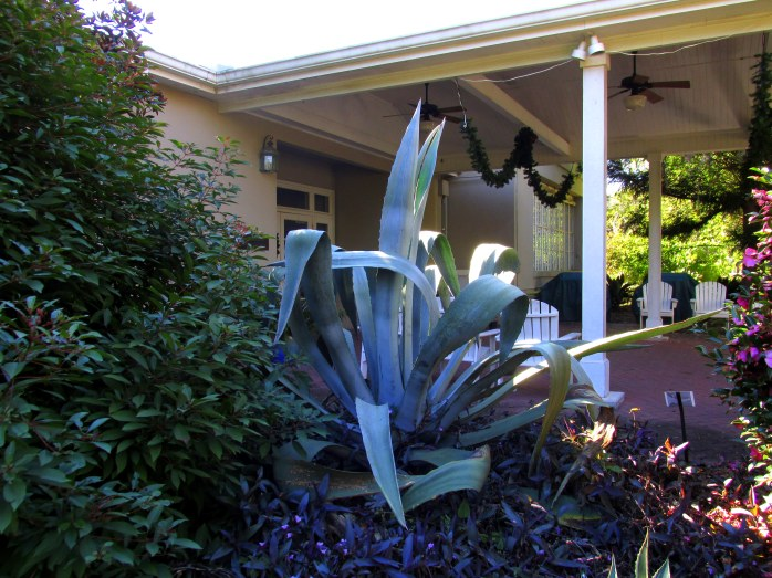 aloe plant near covered porch