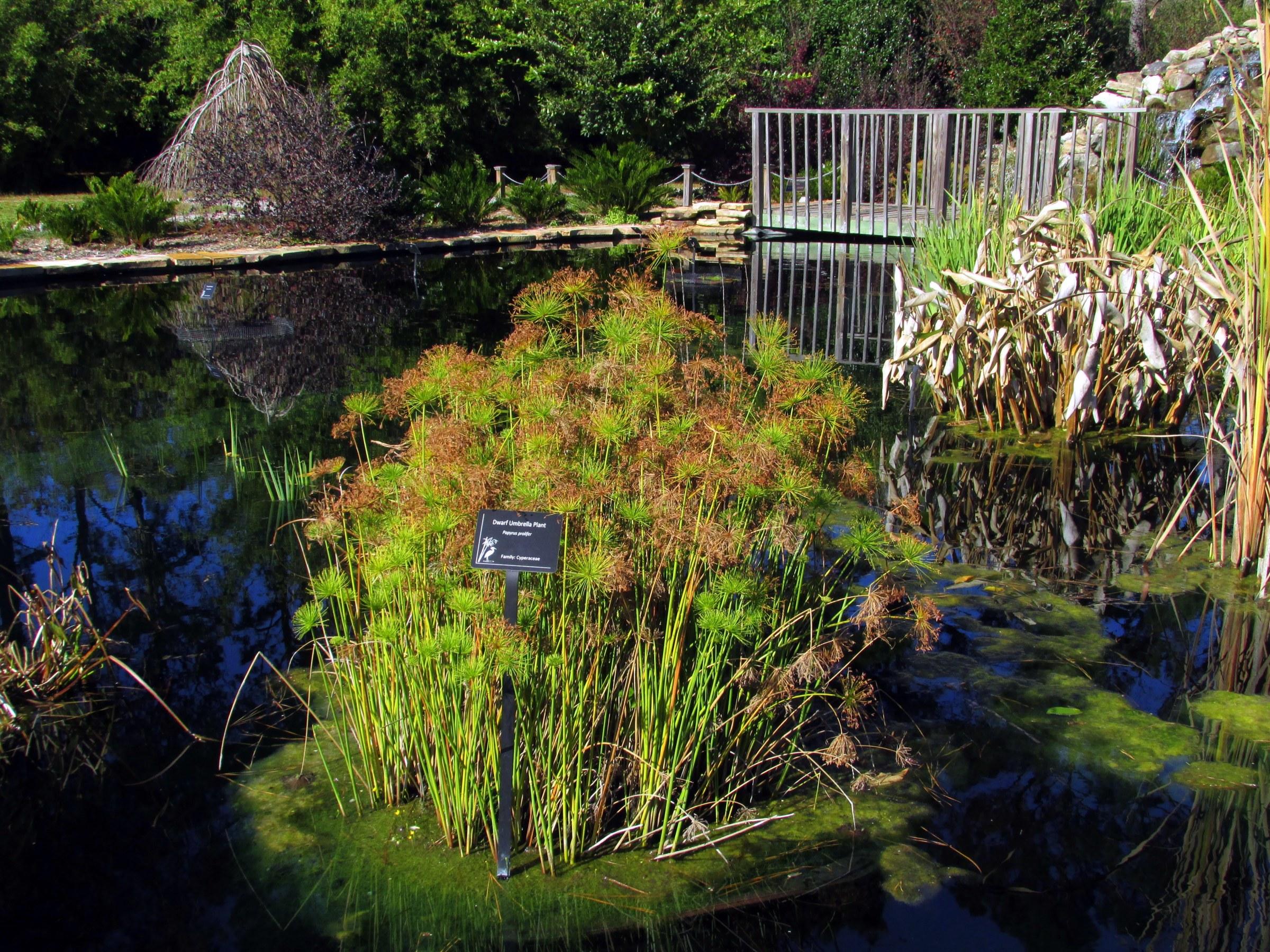 Coastal Georgia Botanical Gardens A Moveable Garden