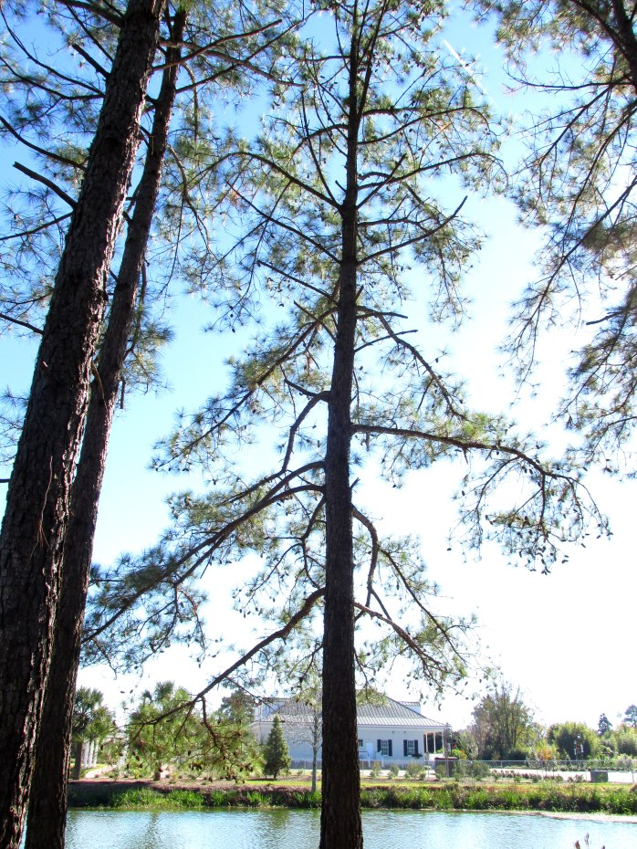 view of visitors center from Shade garden, with loblolly pines