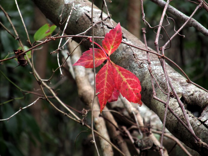 vines, leaves