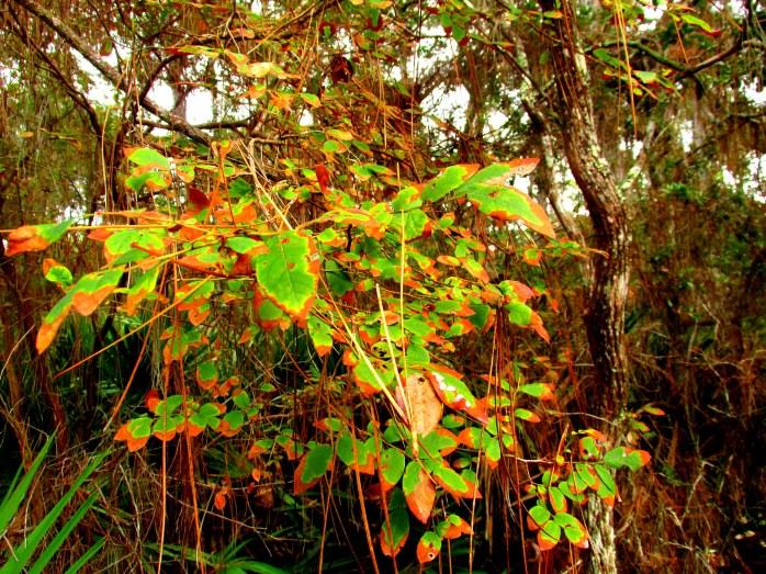 mottled leaves