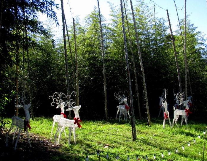 reindeerlightsbambooXmasCGBGSavannah19Dec2015