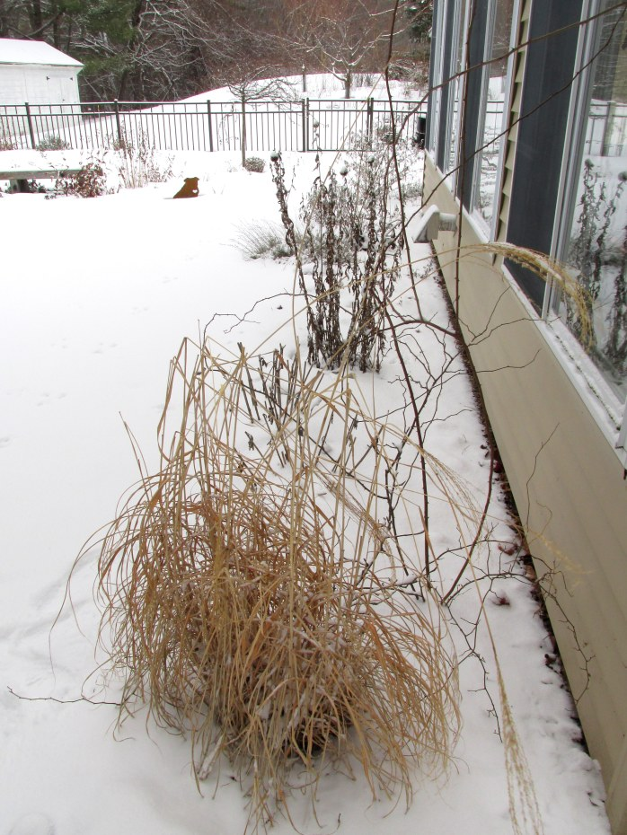 sunroom border with grasses, globe thistle, and a butterfly bush at the far end, 5 Feb