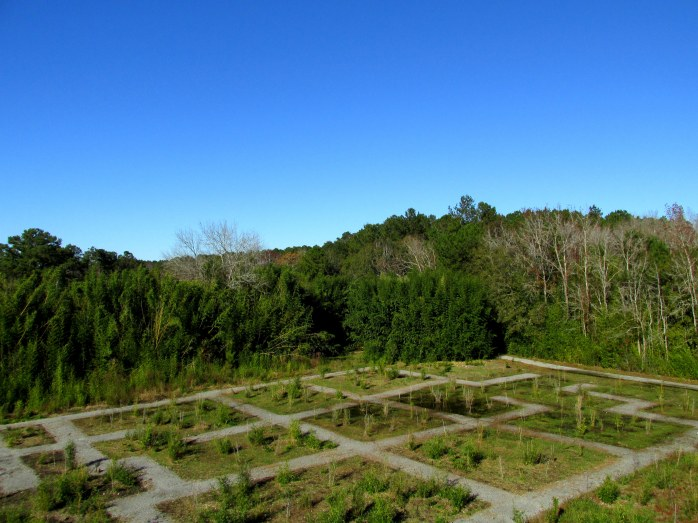 bamboo maze from viewing platform