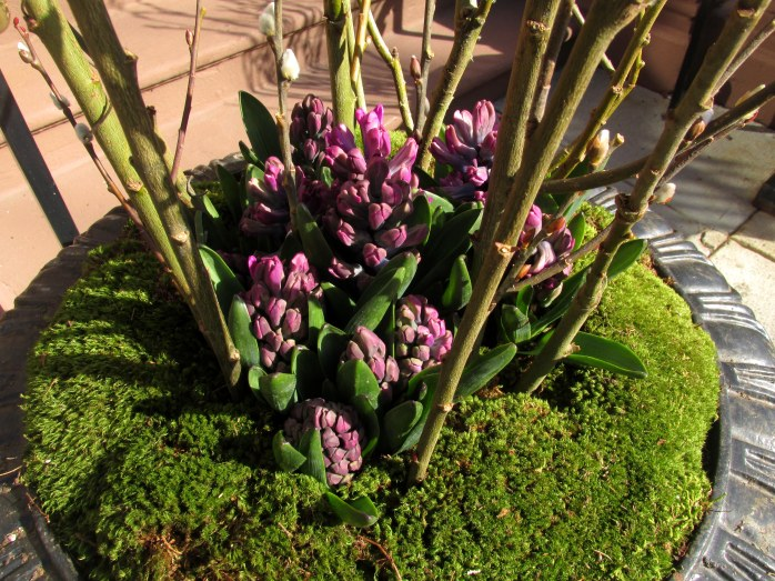 planter arrangement on Commonwealth Avenue