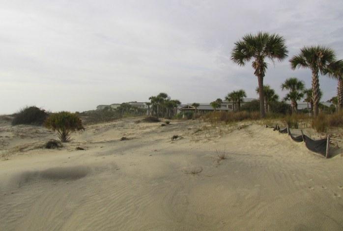 sand dunes near Great Dunes Park