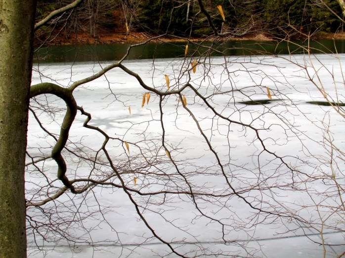 branches, iced-over Lake Runnemede, Windsor VT, 28 Feb 2016