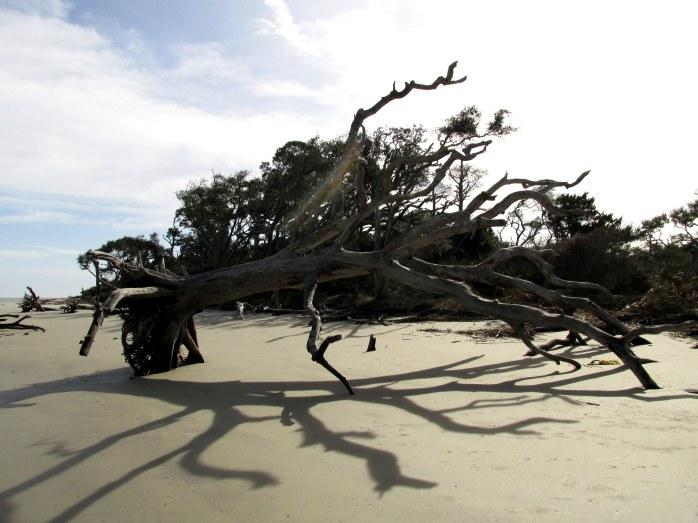 treegraveyardshadowsnorthbeachJekyll21Dec2015