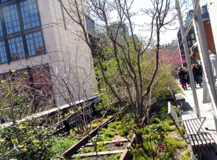 plantingsrailroadtracksTomHighLineNYC10April2016
