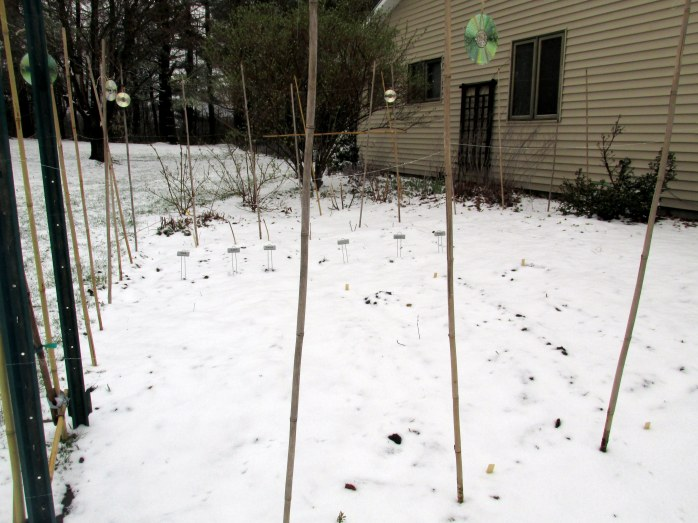 vegetable garden in snow