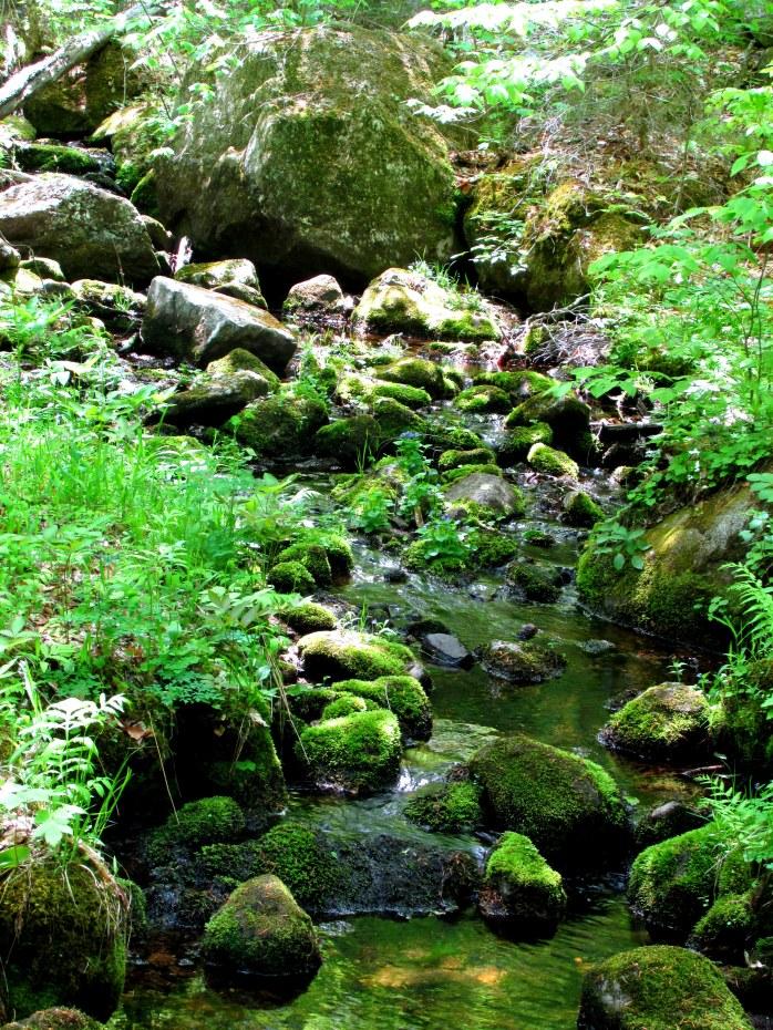 rocky mossy brook