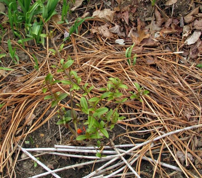 wild raisin, 13 May