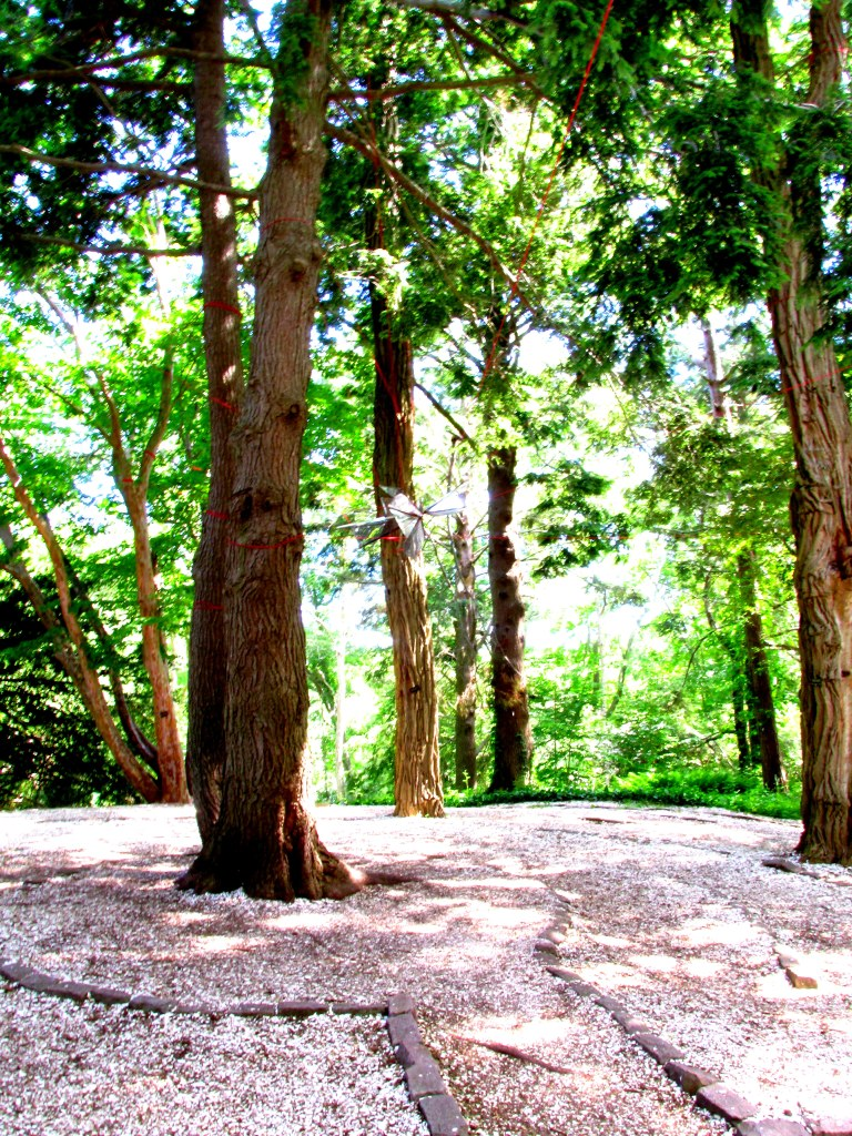 trees in path