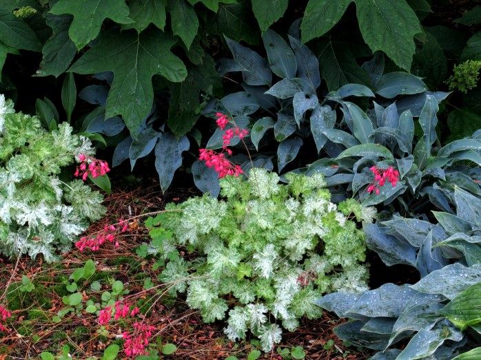 heuchera with hostas