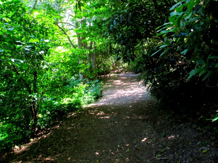 wooded path near pond