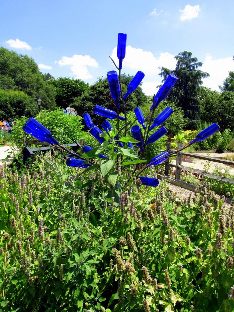 anise hyssop and blue bottles in children's garden