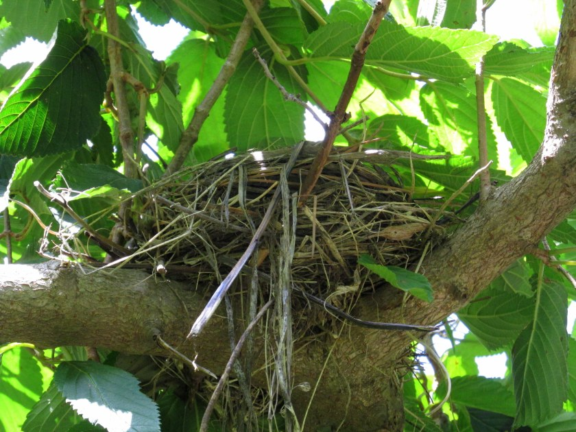 one of several bird's nests seen