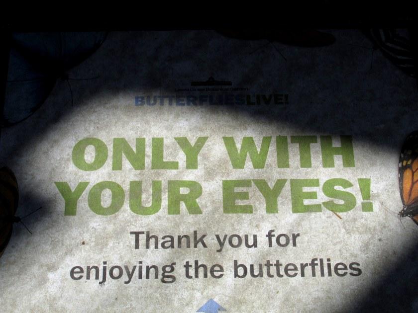 ButterfliesLiveOnlyWithYourEyesGinterRichmond17July2016