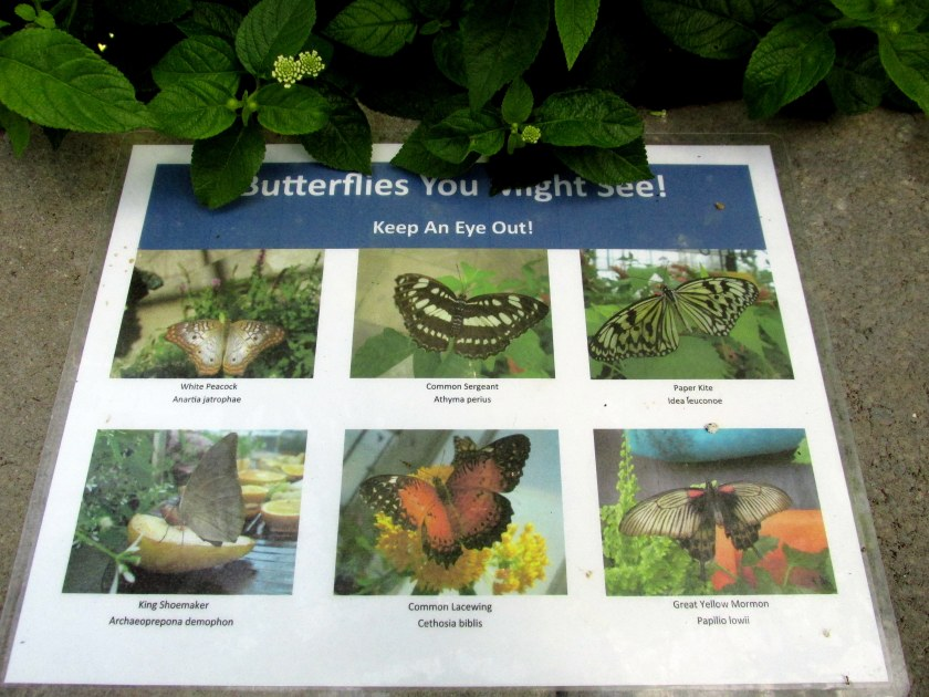 Butterflies You Might See! sign ... I saw the White Peacock being born, and I've seen Paper Kites here before