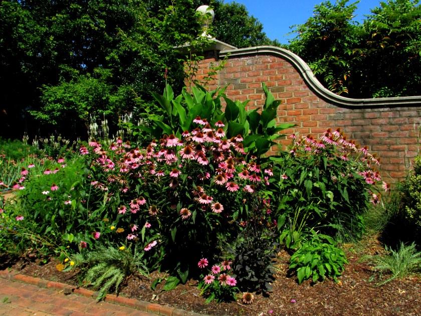 echinacea and brick wall
