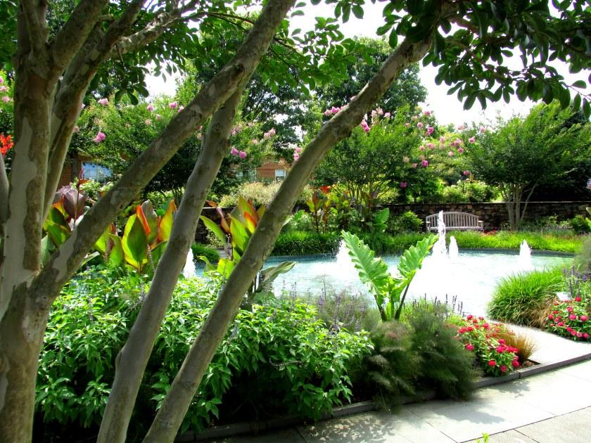 fountain garden, crape myrtles